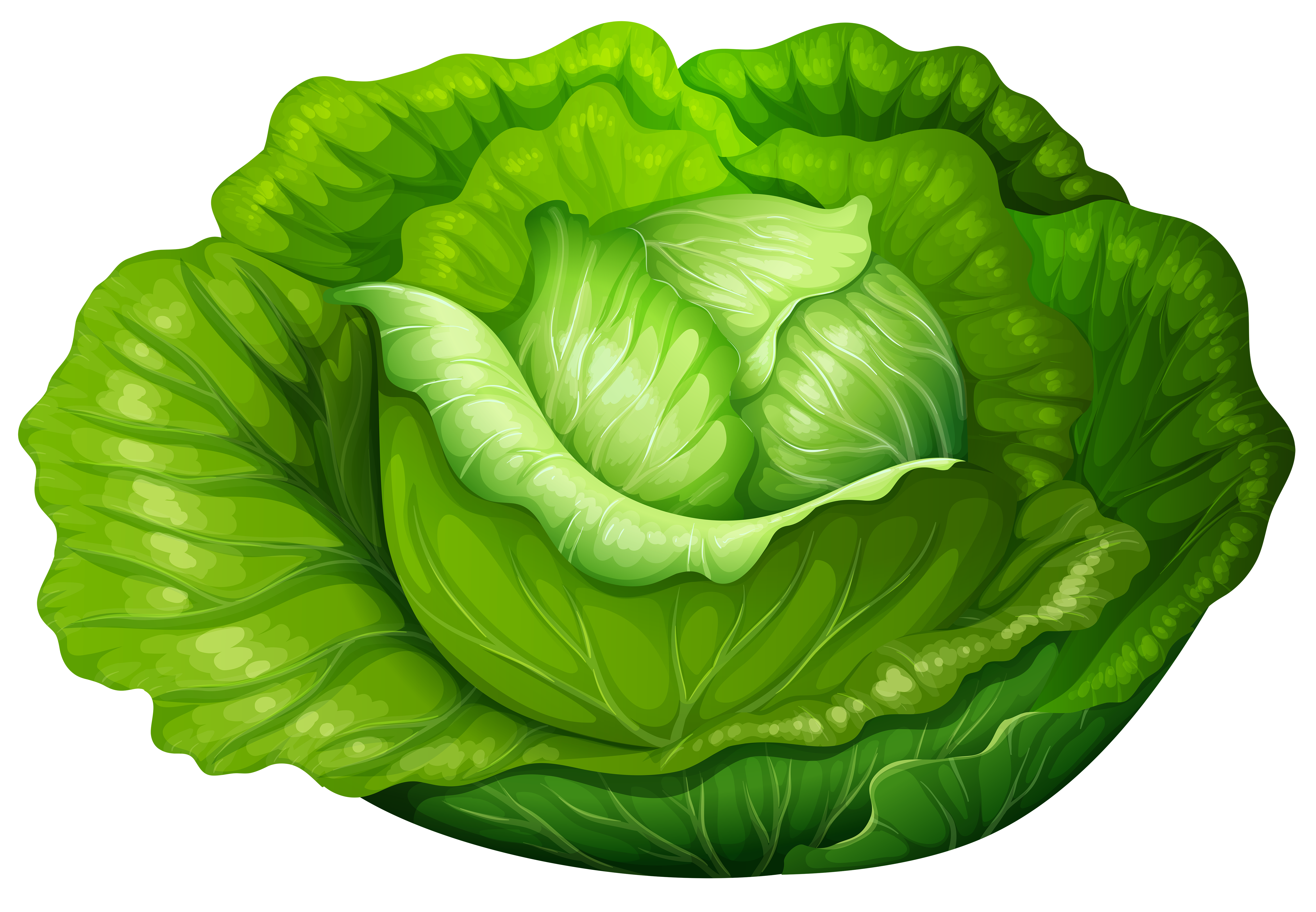 Clipart cabbage.