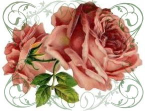 cabbage roses inkspired musings: A rose fantasy http://www.