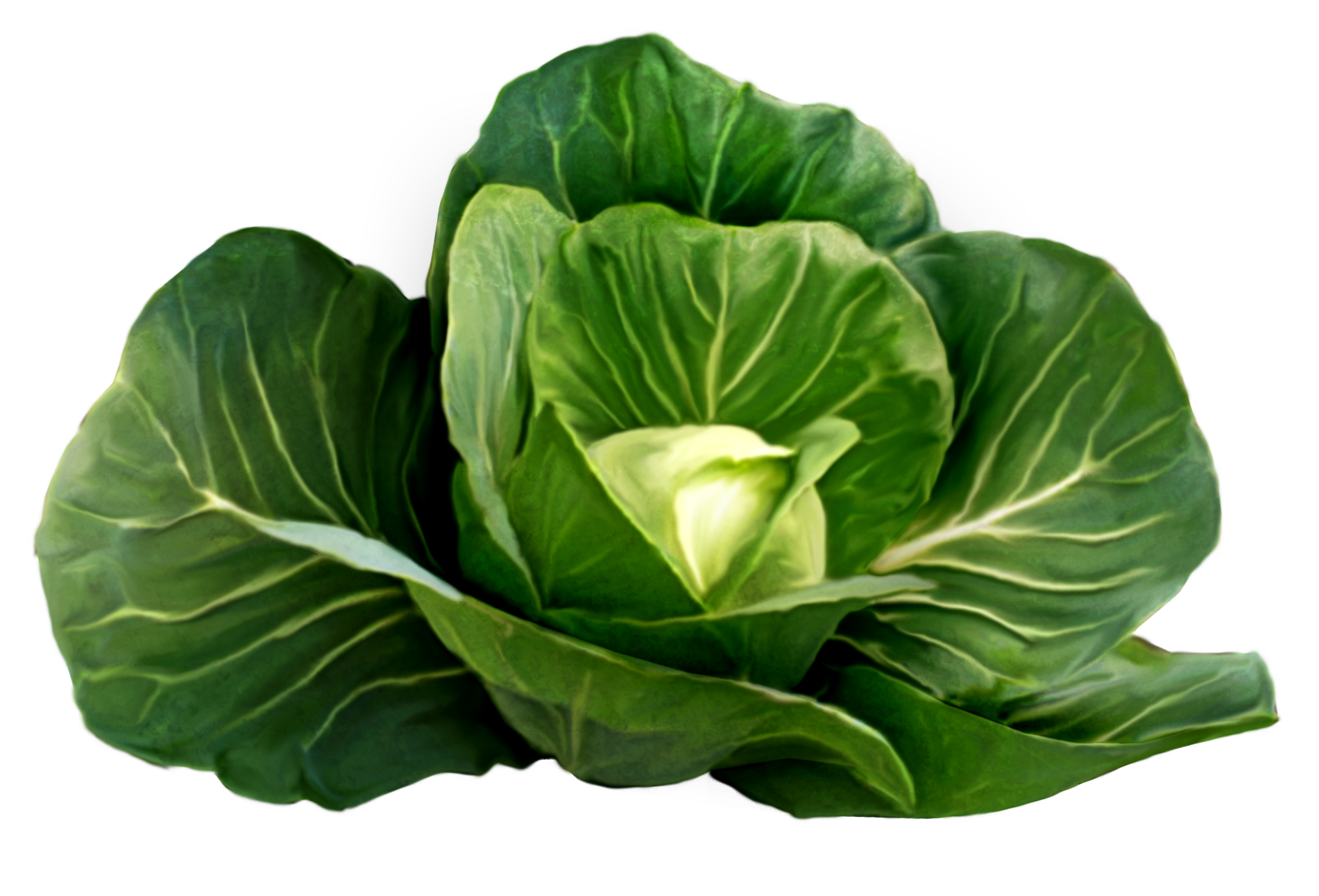 Cabbage_Picture_Clipart.png?m=1399672800.