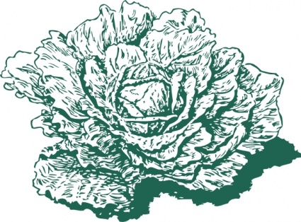Dutch Cabbage clip art Free Vector.