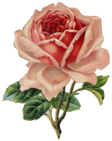 Vintage rose clipart.