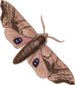 Cabbage Moth Clip art.