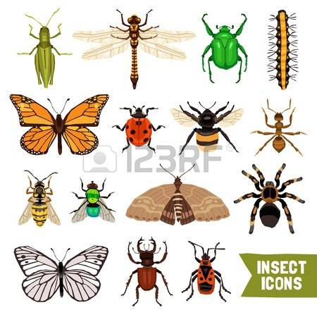 164 Cabbage Butterfly Cliparts, Stock Vector And Royalty Free.