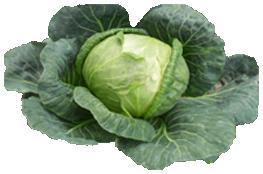 Cabbage PNG Transparent Images.