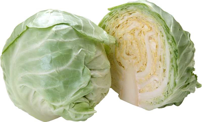 Download Free png Cabbage PNG image, Download PNG image with.