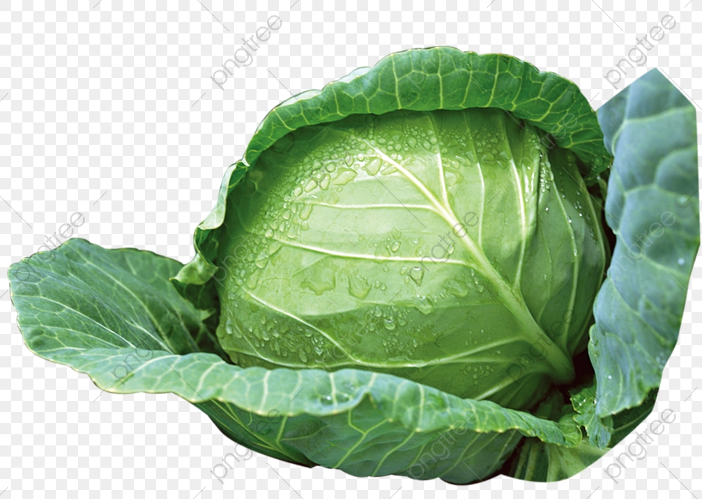 Green Cabbage, Vegetables, Cabbage PNG Transparent Image and Clipart.