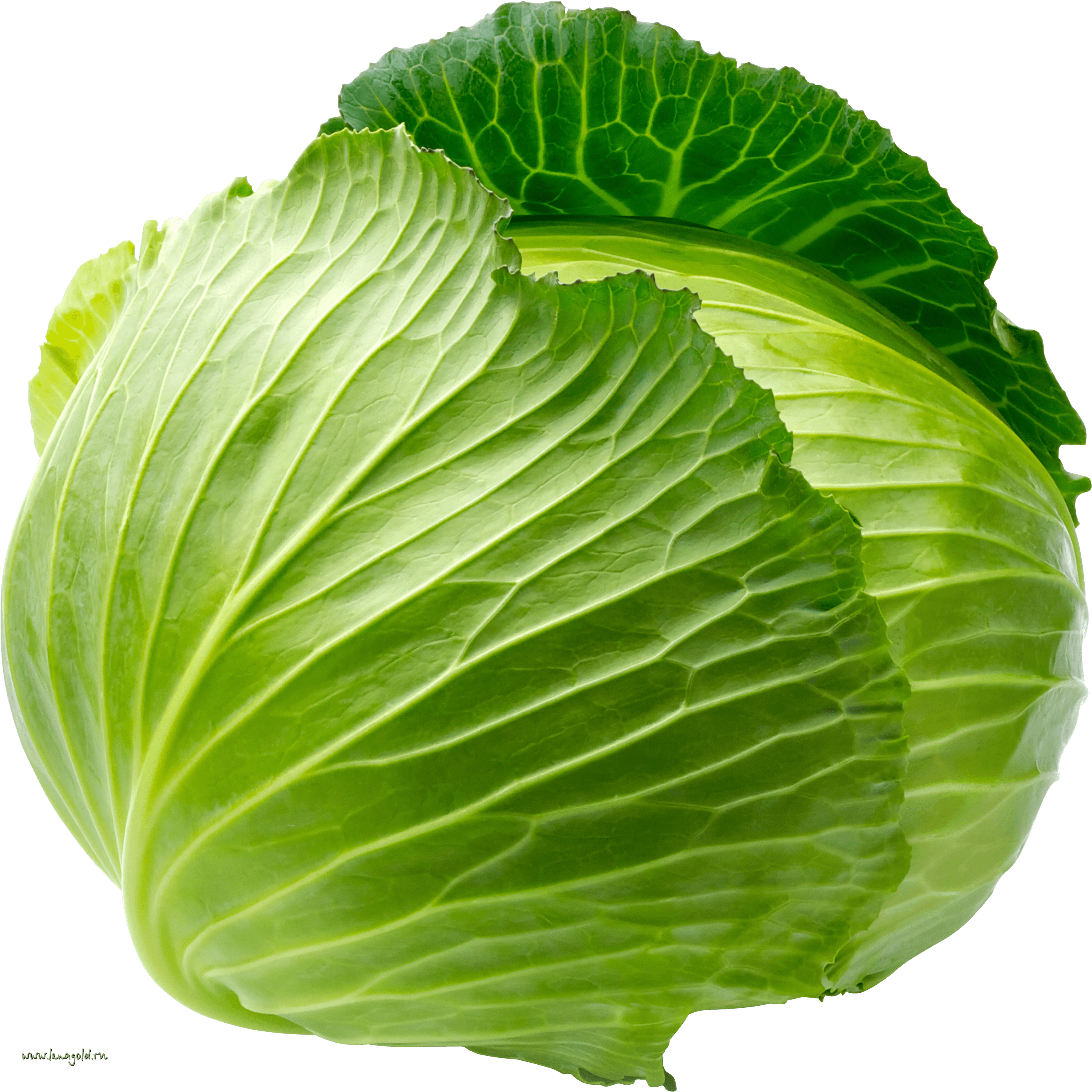 Download Cabbage Png Image HQ PNG Image.