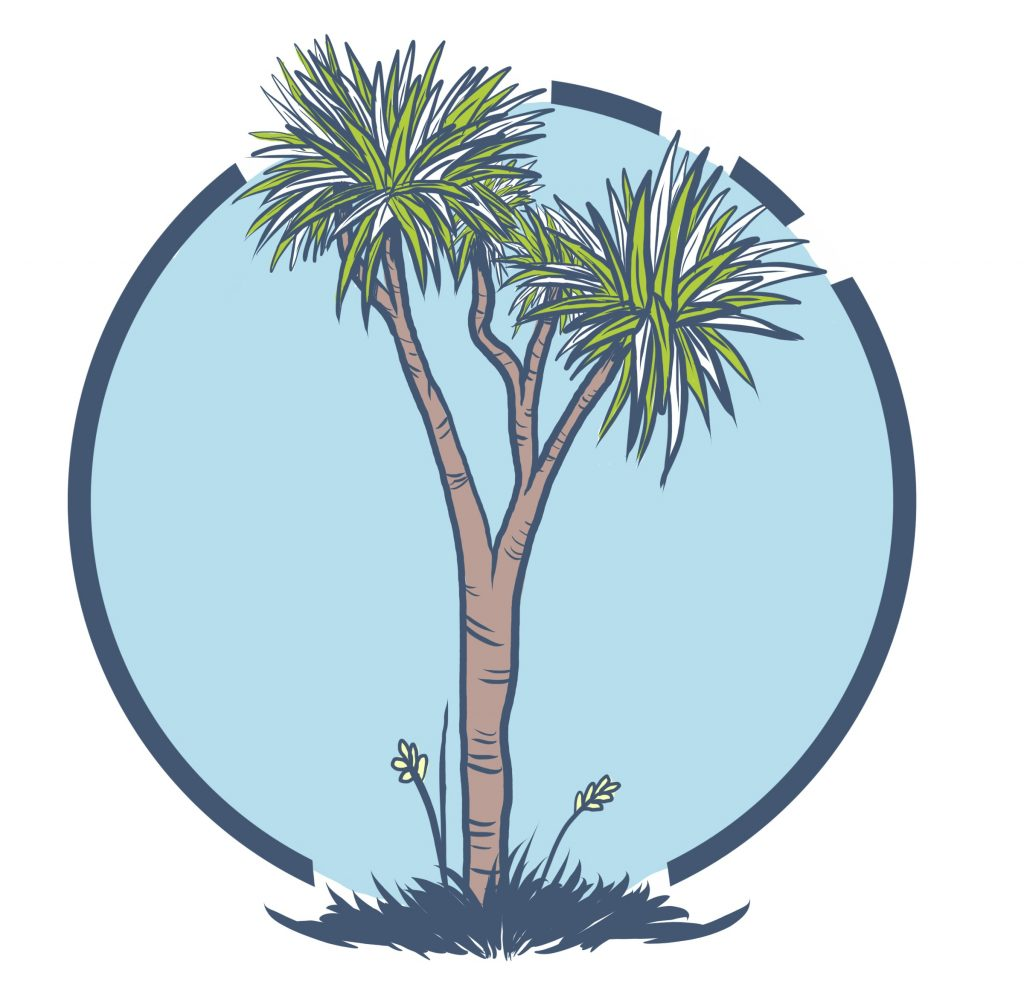 This is a Cabbage Tree.