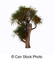 Cabbage tree Clipart and Stock Illustrations. 161 Cabbage tree.