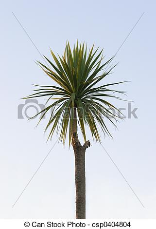 Stock Photo of Cabbage Tree, Hawke\\\'s Bay, New Zealand.