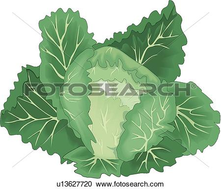 Cabbage Clip Art and Illustration. 4,206 cabbage clipart vector.
