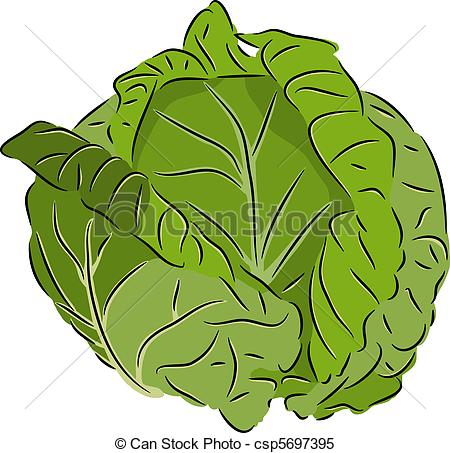 Cabbages Clipart and Stock Illustrations. 5,505 Cabbages vector.