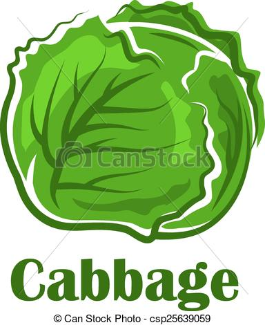 Clipart Vector of Cabbage vegetable with crunchy green leaves.