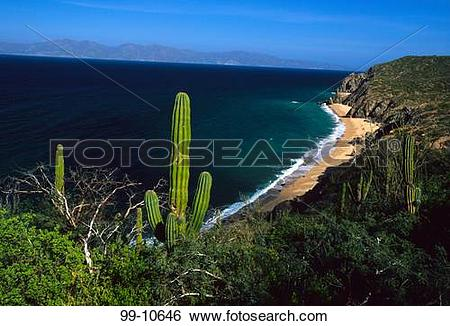 Stock Images of Cactus plants on the coast, Rancho Las Cruces.