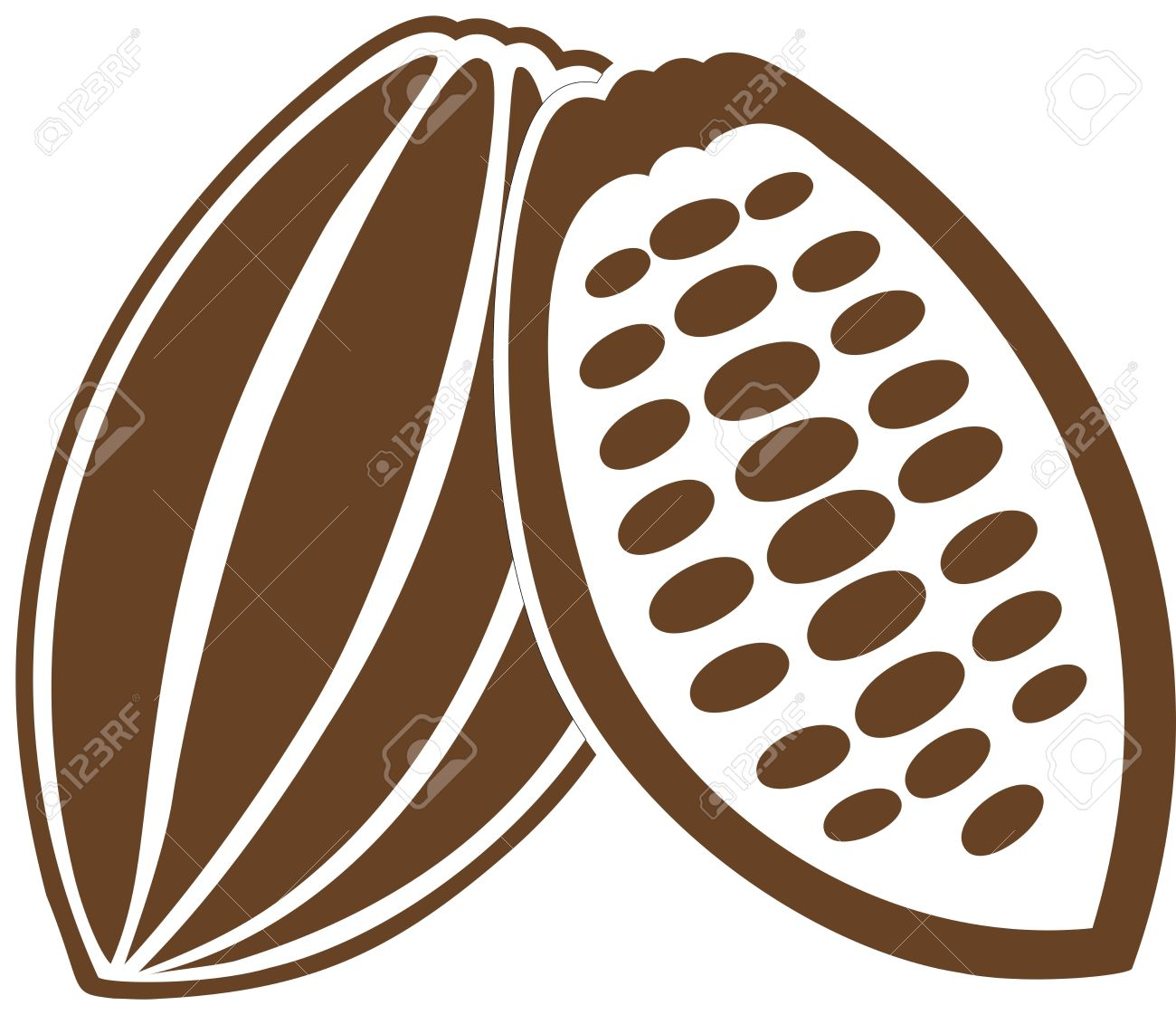 Cacao Bean Cacao Fruit Cocoa Bean Cocoa Fruit Royalty Free.