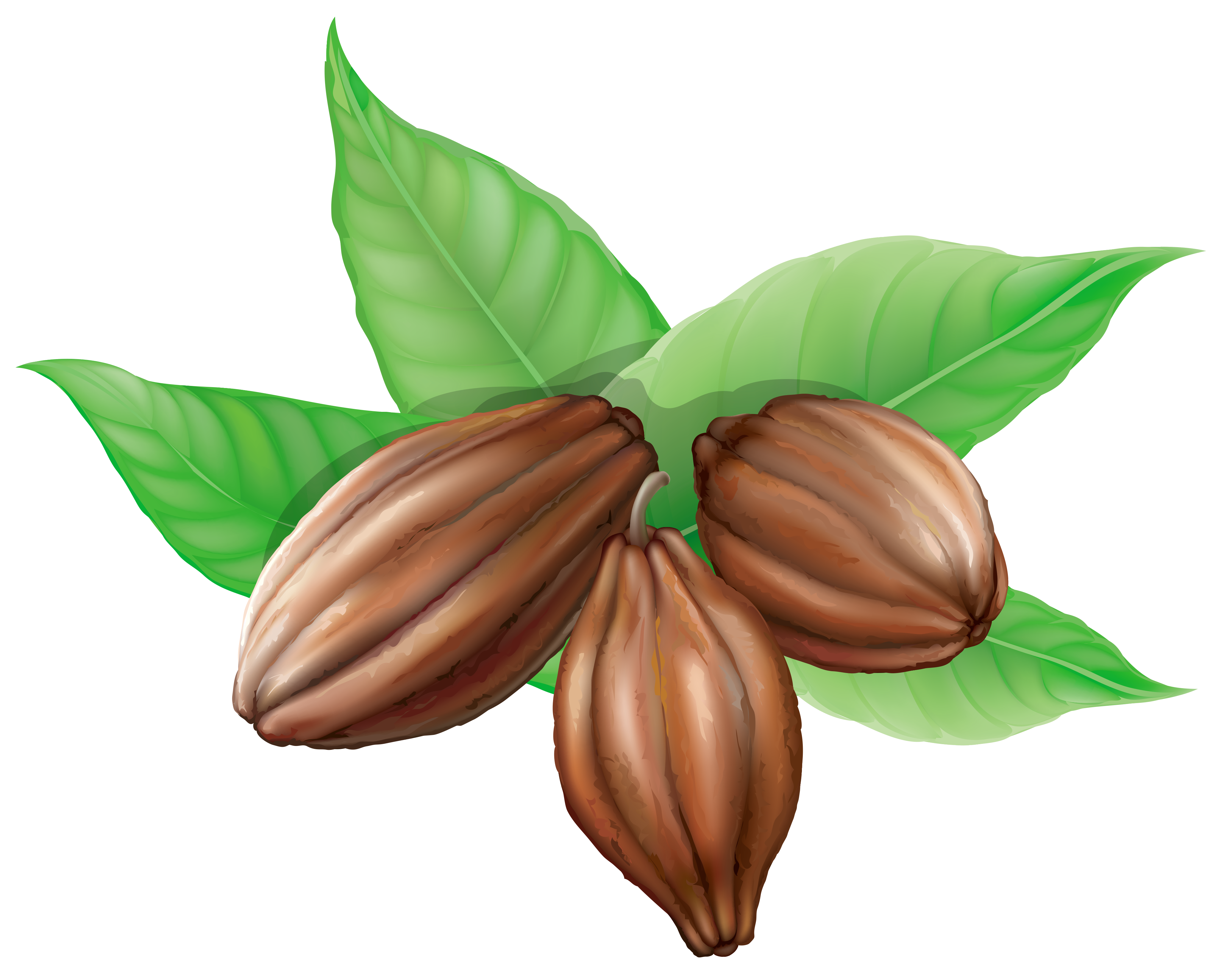 Cacao Beans Clipart.