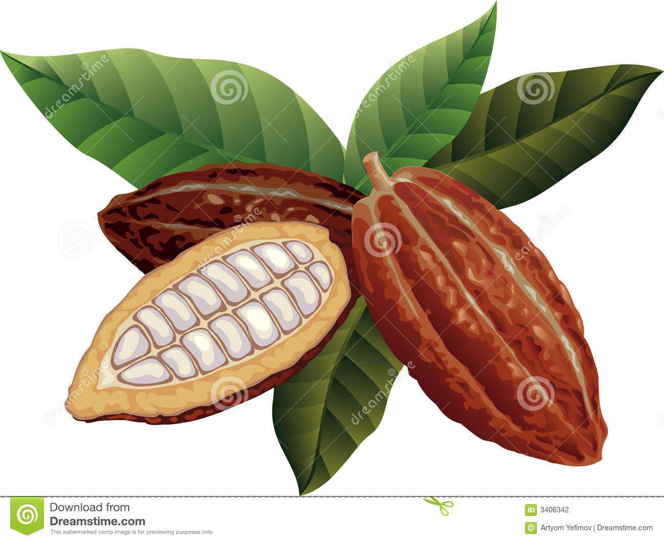 Cacao Fotos De Stock.