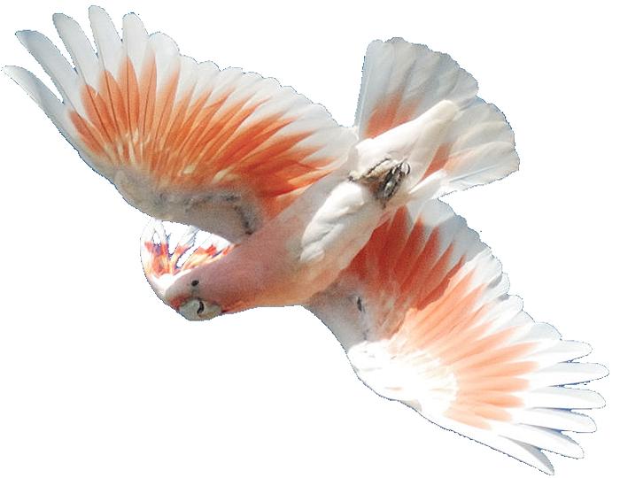 Masked Bird Images.