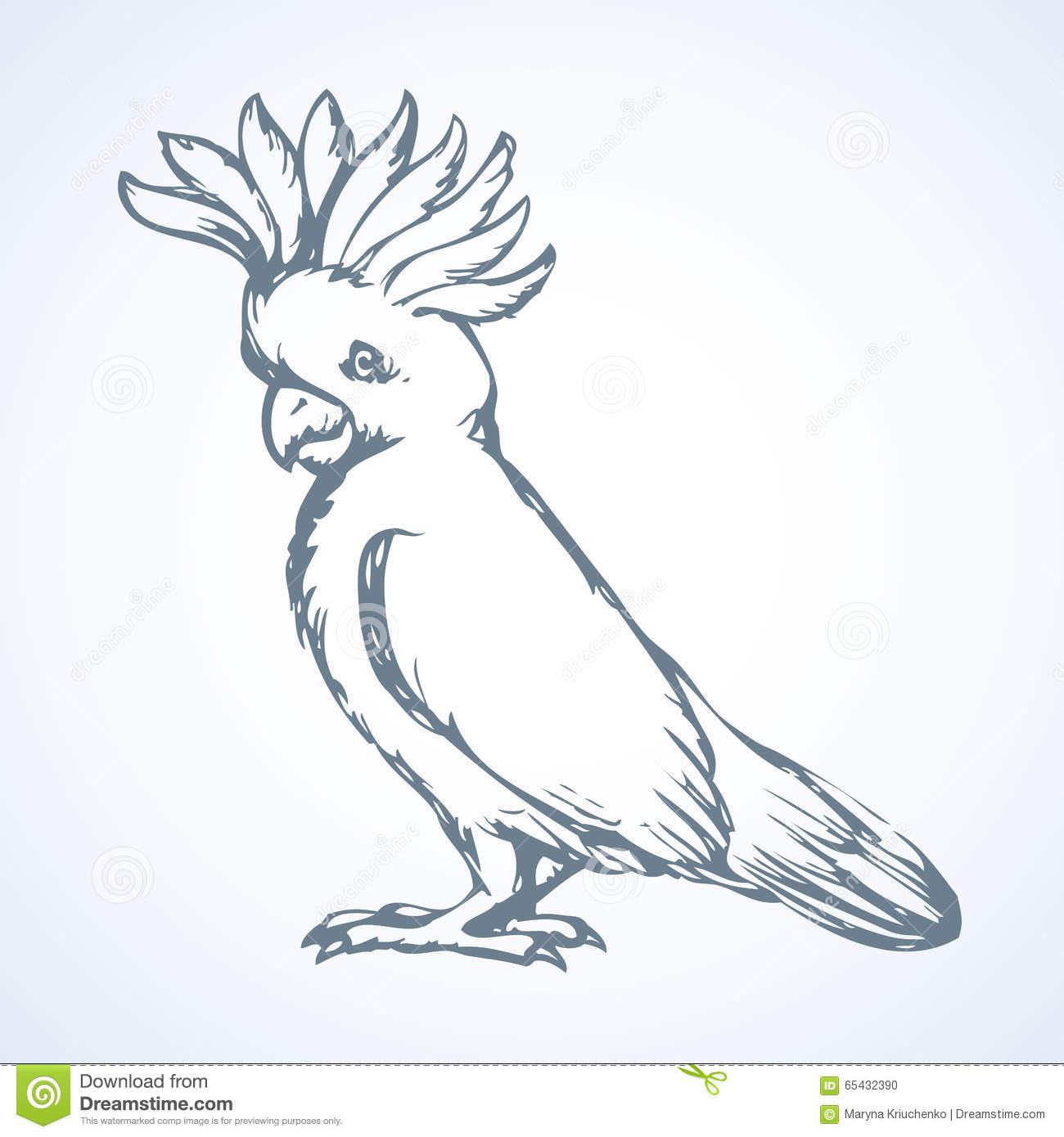 Parrot. Vector Drawing Stock Vector.