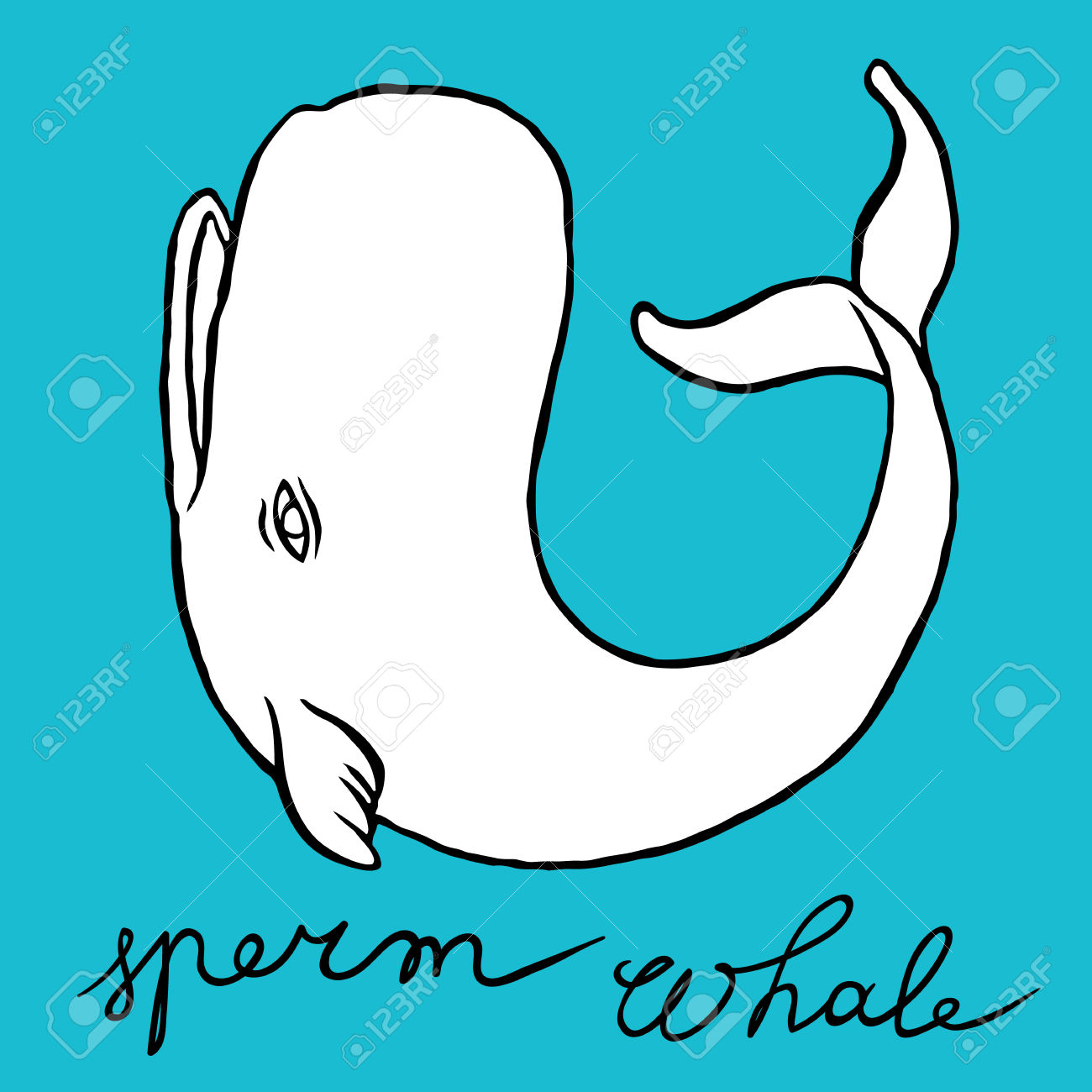 Cachalot Or Sperm Whale.