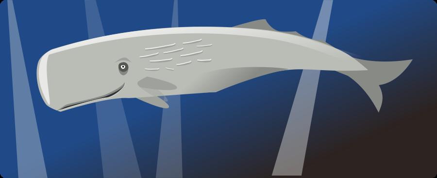 cachalot medium 600pixel clipart, vector clip art.