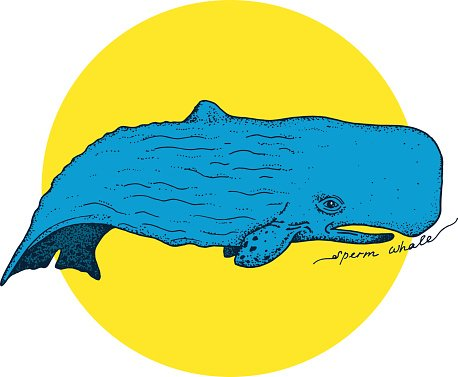 Big sperm whale.