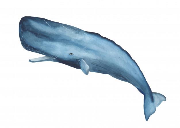 Acuarela azul cachalote clipart.