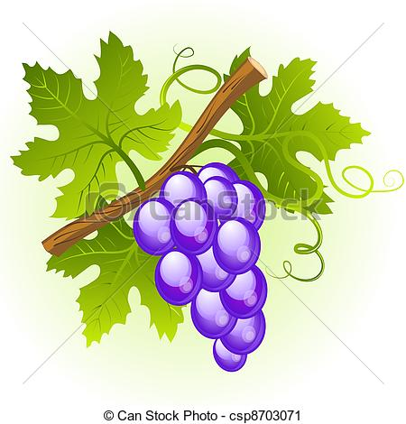 Clipart of Grape cluster with green leaves csp8703071.