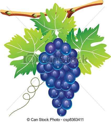 Vector Clip Art of vector grape cluster and green leaves.