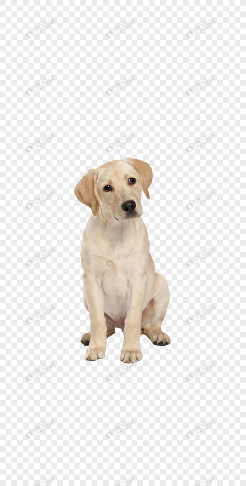 filhote de cachorro bonito Imagem Grátis_Gráficos Número.