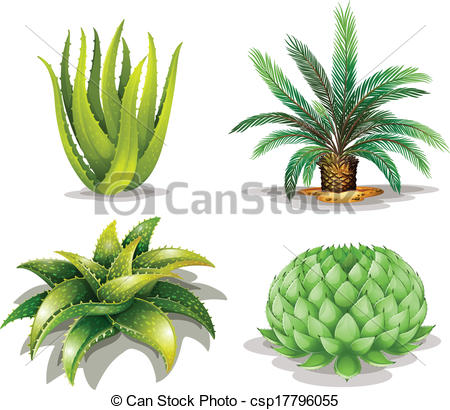 Clipart Vector of Cactus plants.