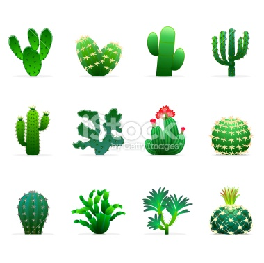 1000+ images about cactus on Pinterest.