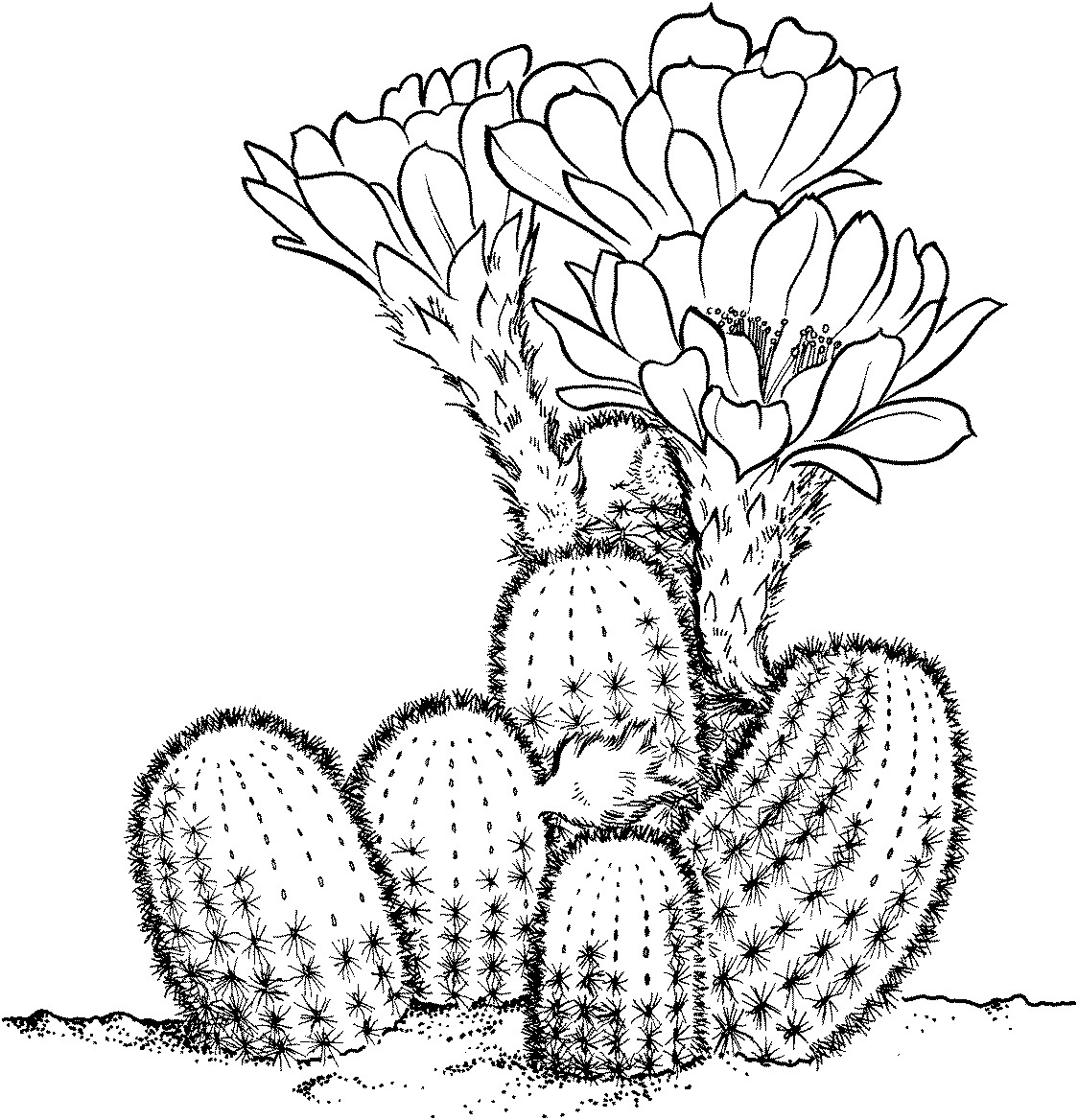 Printable Cactus Coloring Pages.