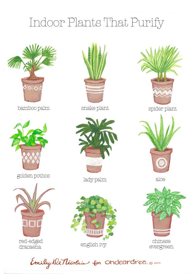 1000+ images about house plants on Pinterest.