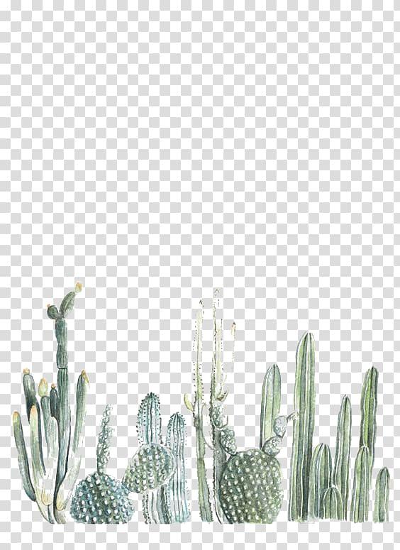 Cactaceae Cacti & Succulents Desktop Succulent plant.