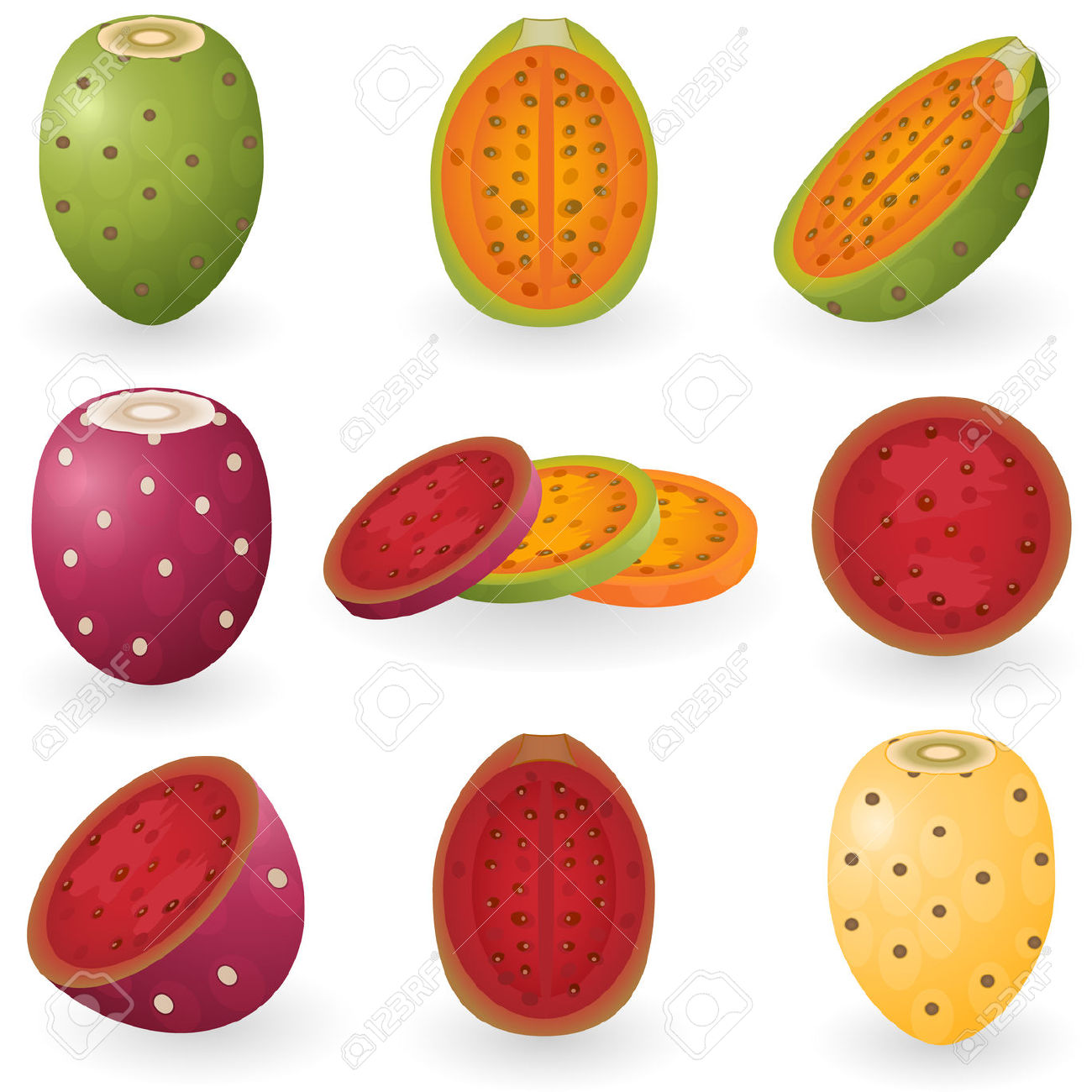 Illustration Of Prickly Pear Fruit Also Known As Opuntia, Cactus.