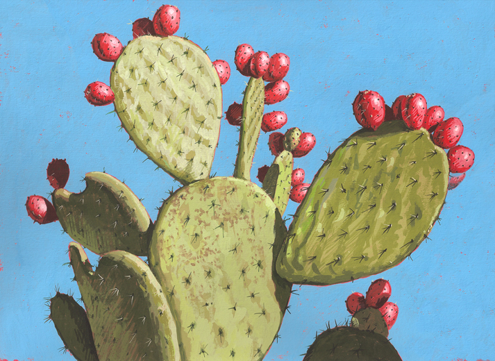1000+ images about prickly pear on Pinterest.