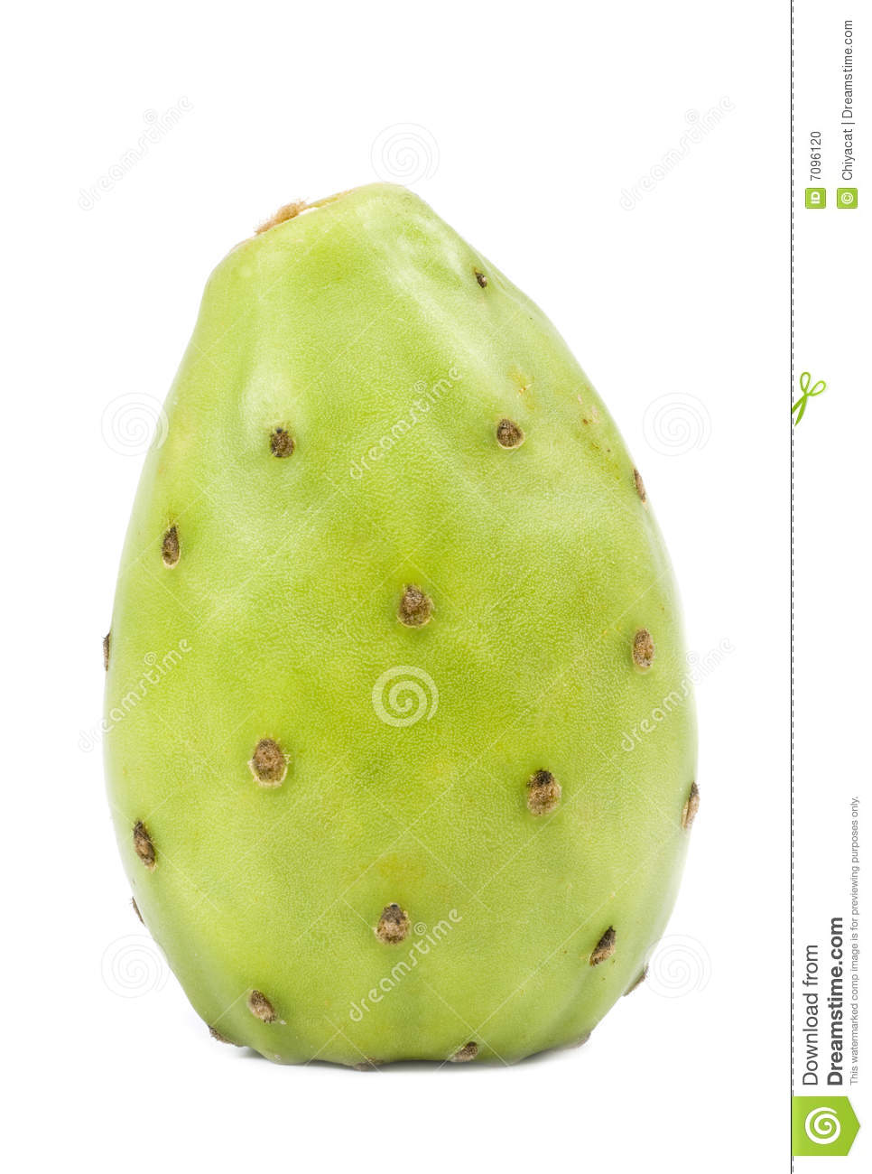 Green Cactus Pear Stock Photo.