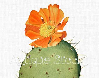 Vintage cactus clip art.