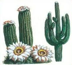 Free Saguaro Cactus Blossom Clipart.