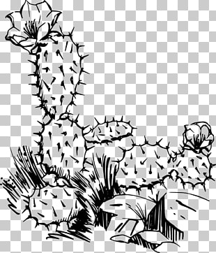 49 cactus Border PNG cliparts for free download.
