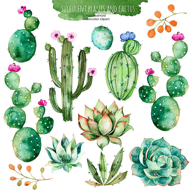 Best Cactus Illustrations, Royalty.