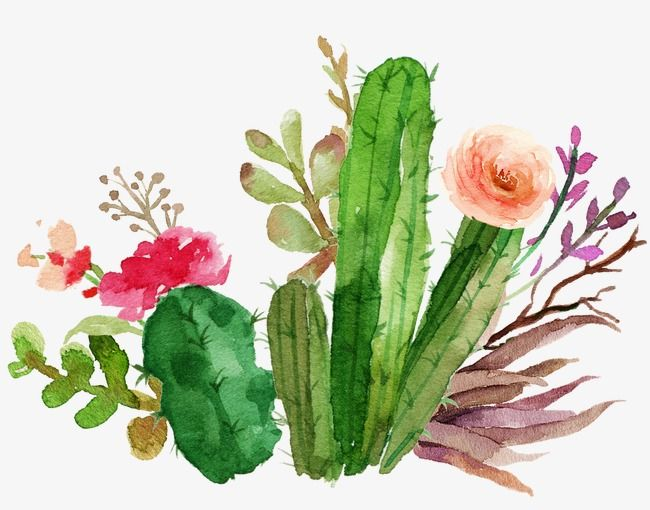 Cactus Flowers Watercolor, Watercolor Clipart, Watercolor.