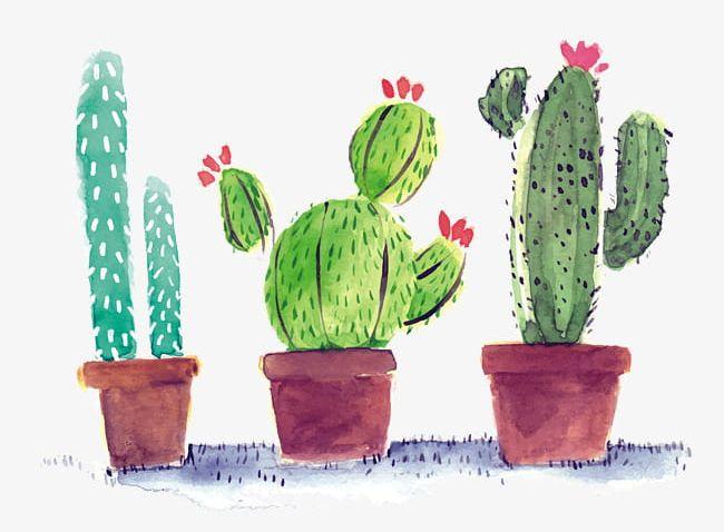 Watercolor Cactus PNG, Clipart, Cactus, Cactus Clipart.