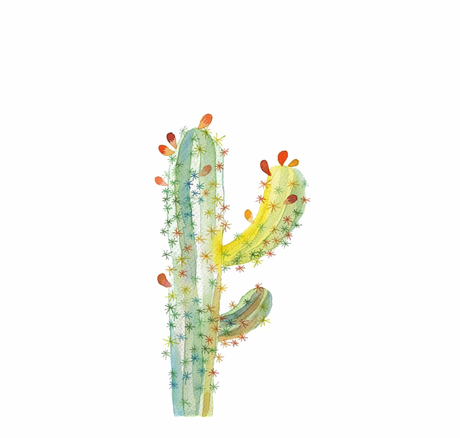 Ugallery Cactaceae Drawing.