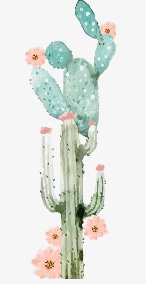 Cactus, Watercolor Cactus, Drawing Plant, Green PNG Transparent.