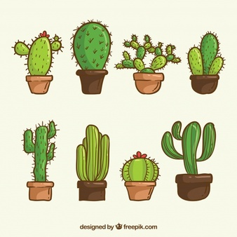 Cactus Vectors, Photos and PSD files.