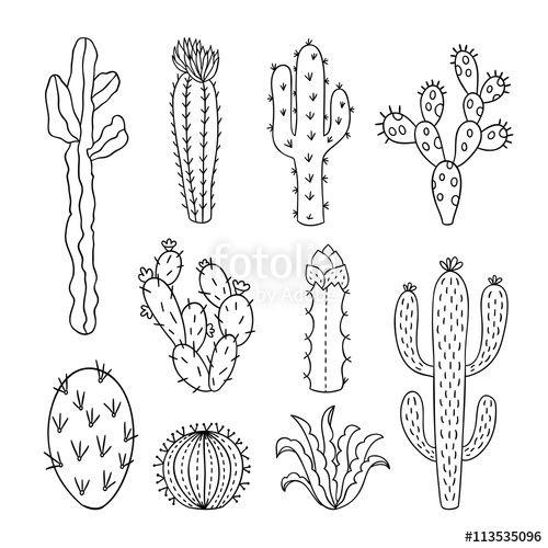 Cactus outline vector illustrations. Succulents plants doodle.