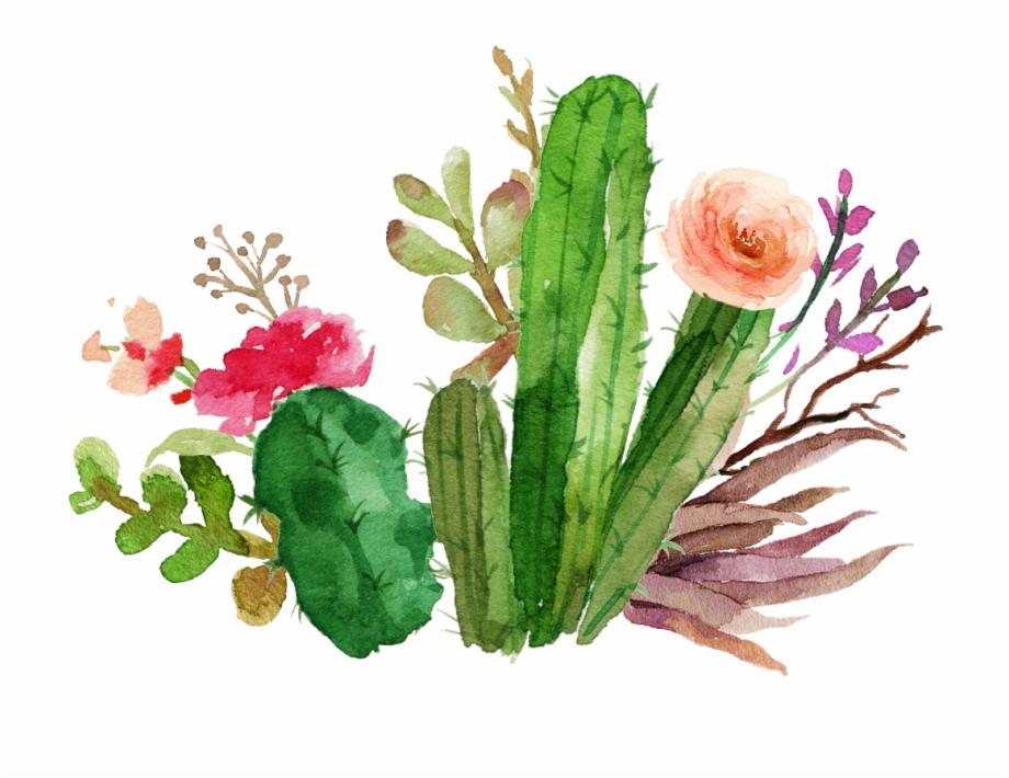 cacti #cactus #succulent #flower #floral #watercolor.