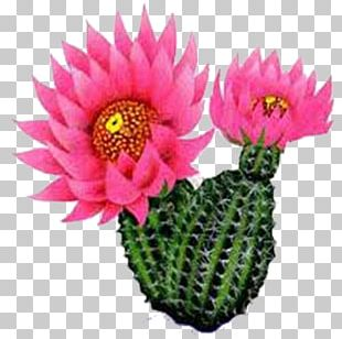 Cactus Flower PNG Images, Cactus Flower Clipart Free Download.